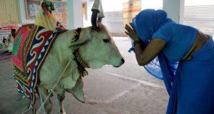 nti-news-cow-hate-marketing-of -politics-in-india