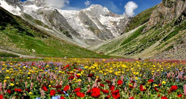 nti-news-polygonum-damage-to-valley-of-flowers